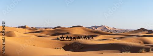 Fotografie, Obraz  Dromadaires dans le désert du Sahara au Maroc