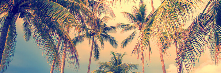 Panoramic palm trees tropical background, vintage style process banner