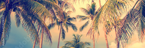 Poster Palmier Panoramic palm trees tropical background, vintage style process banner