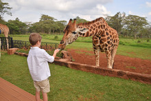 Boy Feeding Giraffe