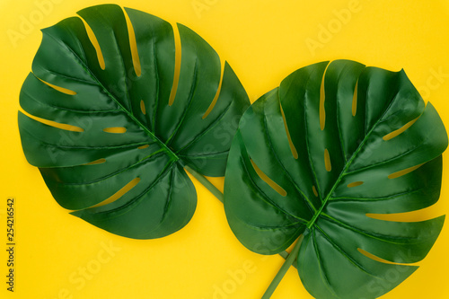 Creative layout of green tropical leaves Monstera on pastel yellow background. Minimal summer exotic leaf concept. Top view. Flat lay