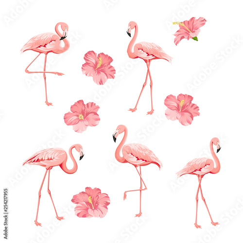 Canvas Prints Flamingo Bird Tropical birds and flowers collection. Pink flamingos set. Hibiscus flowers kit. Fashion tropic bundle. Elements for invitation card and your template design. Vector illustration.