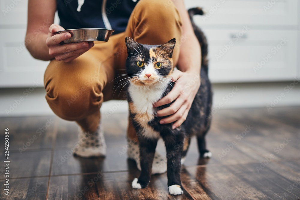 Fototapety, obrazy: Domestic life with cat