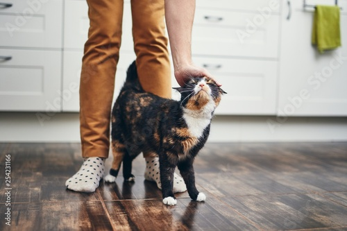 Domestic life with cat Canvas Print