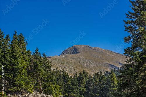 Poster Noord Europa forest mountain highland outdoor scenery panorama landscape of north European part of Earth with ridge in pine trees frame