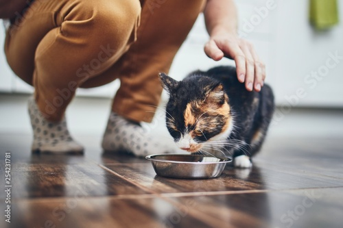 Photo  Domestic life with cat
