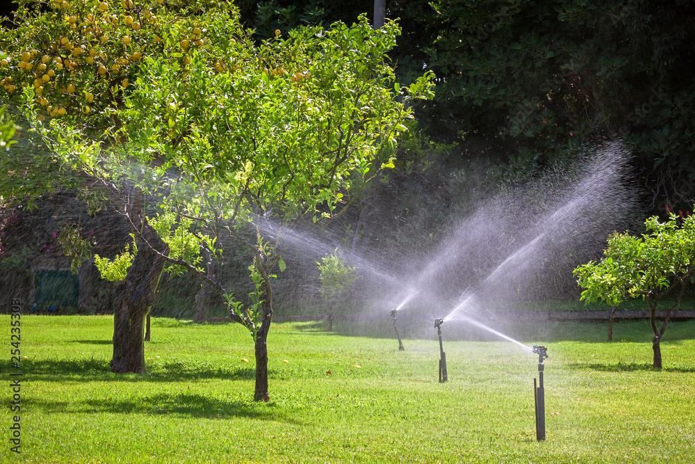 Fototapety, obrazy: Automatic sprinkler watering in the garden