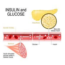 Insulin (in Pancreas) And Gluc...