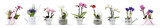 flowers in pots set isolated on white background, web banner with copy space for florist shop concept