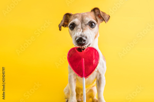 In de dag Hert Sweets eating funny dog on bright yellow background. Hert shaped red candy lollipop.
