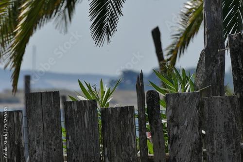 Fotografie, Obraz  palissage et cocotier