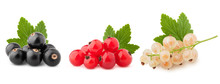 Black, Red And White Currant I...