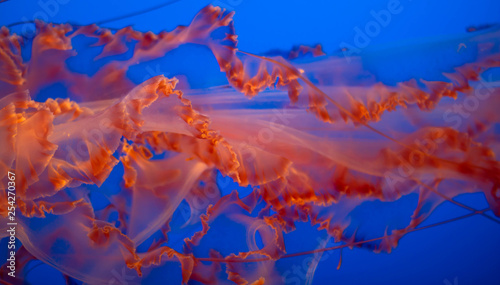 Photo Luminous jellyfish tenacle pattern