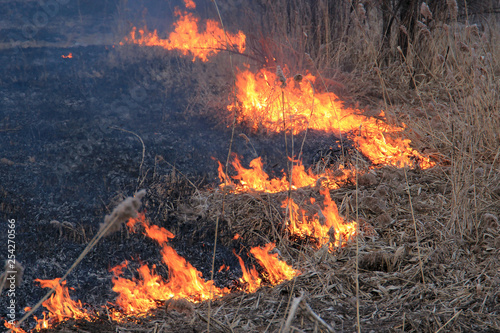 Fotografiet  burning dry grass