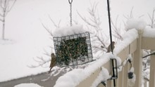 A Flock Of House Finches Eat From A Feeder During A Snow Storm - Slow Motion