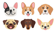 Dog Pet Head Icon