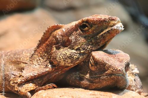 Photo  Lizard