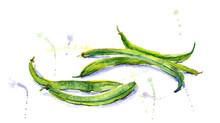 The Green Bean Hand Drawn. Wat...
