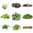 collection of garden Plants on white
