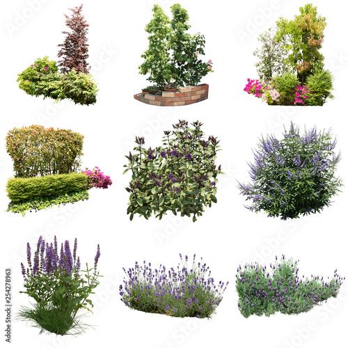 ガーデン庭木素材