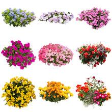 花の切り抜き素材
