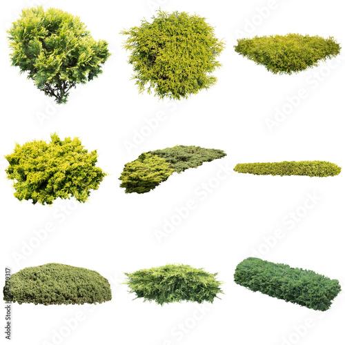 コニファー低木樹木切り抜き素材 Fototapete