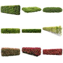 庭木切り抜き素材