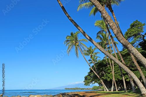 Sloping palm trees - Maui, Hawaii