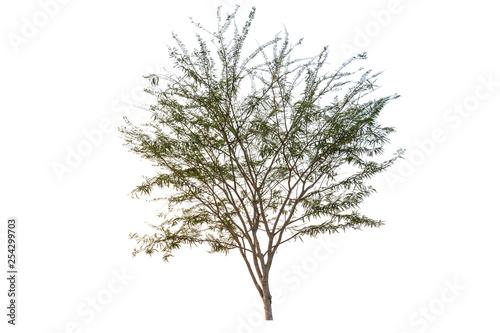 Fotografia, Obraz  Big Tree  isolated on white background