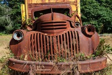 Plants Growing Out Of Vintage Truck, Scrap Car, Kestner Homestaed, Olympic Peninsula, Olympic National Park, Near Quinault, Washington, USA, North America