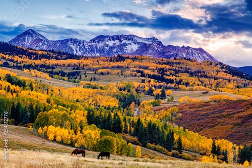 Horses grazing in Colorado in autumn Wallpaper Mural