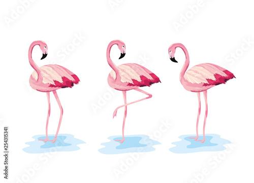 Canvas Prints Flamingo Bird set flamingos tropical wild animal