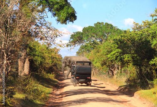 Photo sur Toile Pain Car safari in Yala National Park, Sri Lanka