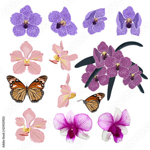 Tuinposter Set of Exotic Blooming and beautiful orchid flowers and botanical plants ,butterfly hand drawn vector illustration stylish and colorful elements