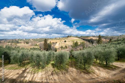 Gaje oliwne i winnice w dolinie Chianti w Toskanii we Włoszech
