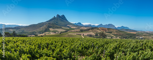 Fotografie, Obraz Beautiful landscape of Cape Winelands, wine growing region in South Africa