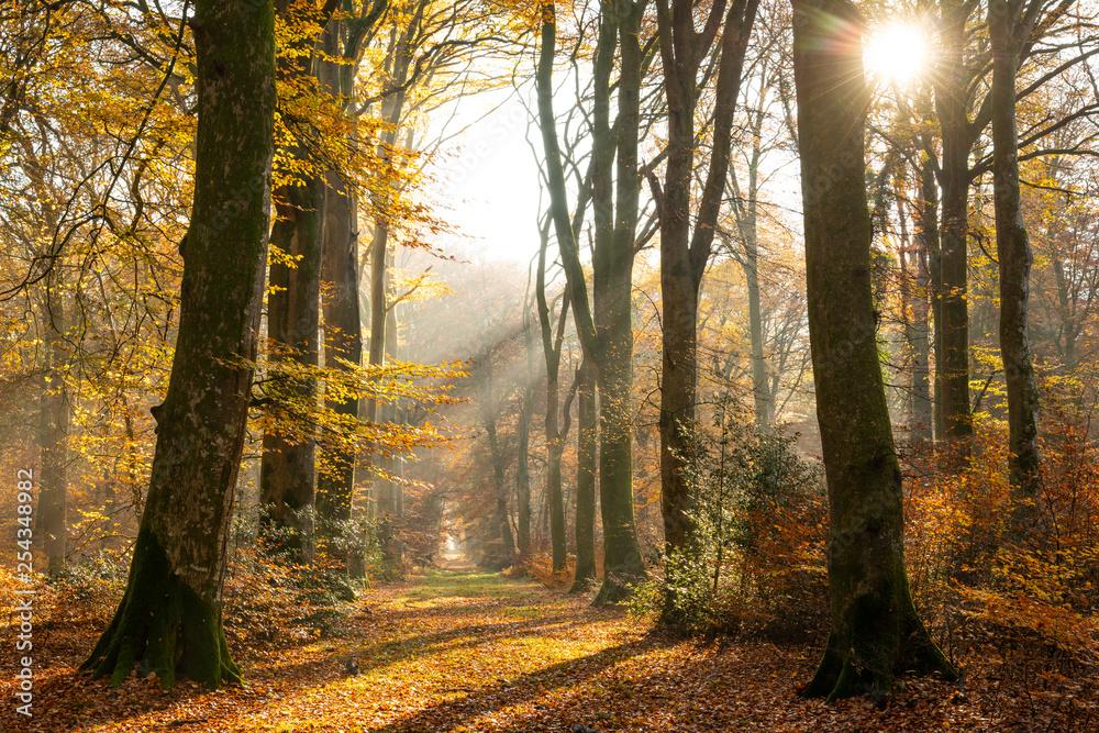 Fototapeta La forêt de Crécy en Automne