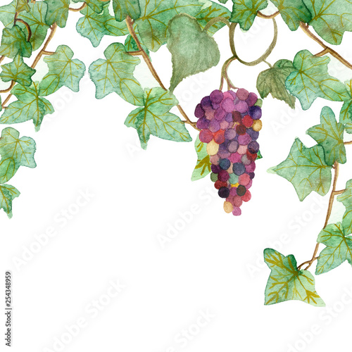 Gorgeous watercolor painting of branches of burgundy grapes, isolated on white background. The hand-painted lush frame is a climbing plant with berries for beautiful design of cards, invitations. Fototapete