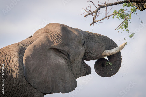 Photo  Mighty Tuskers - Elephants of Nambiti