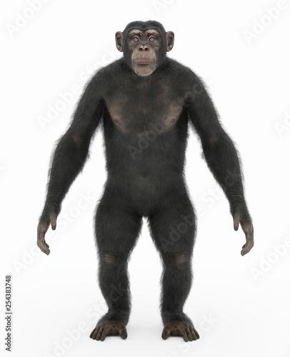 Leinwand Poster Stehender Schimpanse