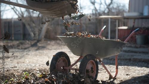 Man loads dry leaves in a wheelbarrow Tapéta, Fotótapéta