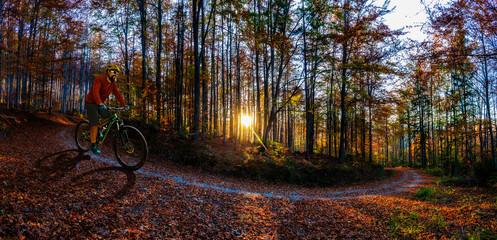 Scena panoramy złoty połysk jesienią w lesie, rano słońce świeci przez drzewa, błękitne niebo w tle.