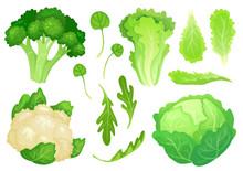 Cartoon Cabbages. Fresh Lettuce Leaves, Vegetarian Diet Salad And Healthy Garden Green Cabbage. Cauliflower Head Vector Illustration