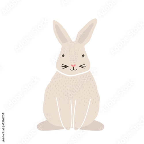 Fotografia Cute lovely pretty white bunny, rabbit or hare isolated on white background