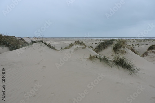 Fotografia, Obraz  The shifting sand dunes covered with marram grass in Rømø, a Danish island, the