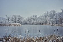 A Calm, Frozen Pond With Catta...