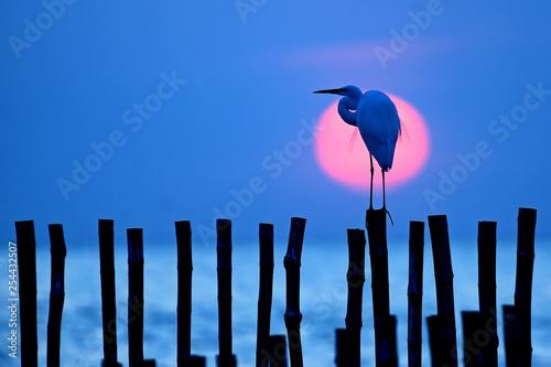 Fotografija  egret bird and  sun