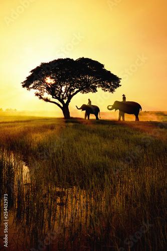 Keuken foto achterwand Zwavel geel elephant silhouette in field