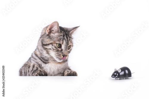 Katze mit Maus ist neugierig Tablou Canvas