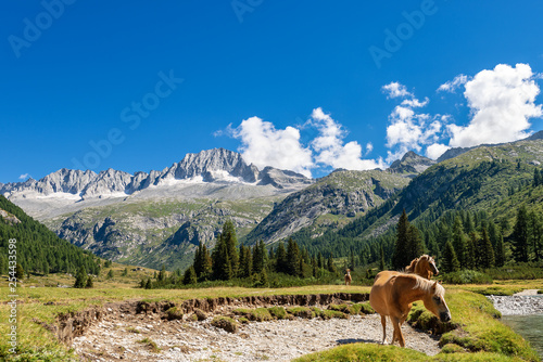 Adamello and Brenta National Park - Horses and Mountain Peak of Care Alto Fototapet